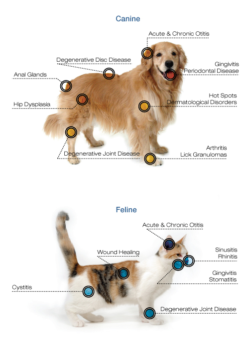 Laser Therapy Healing Arts Veterinary Center 2216 Palm